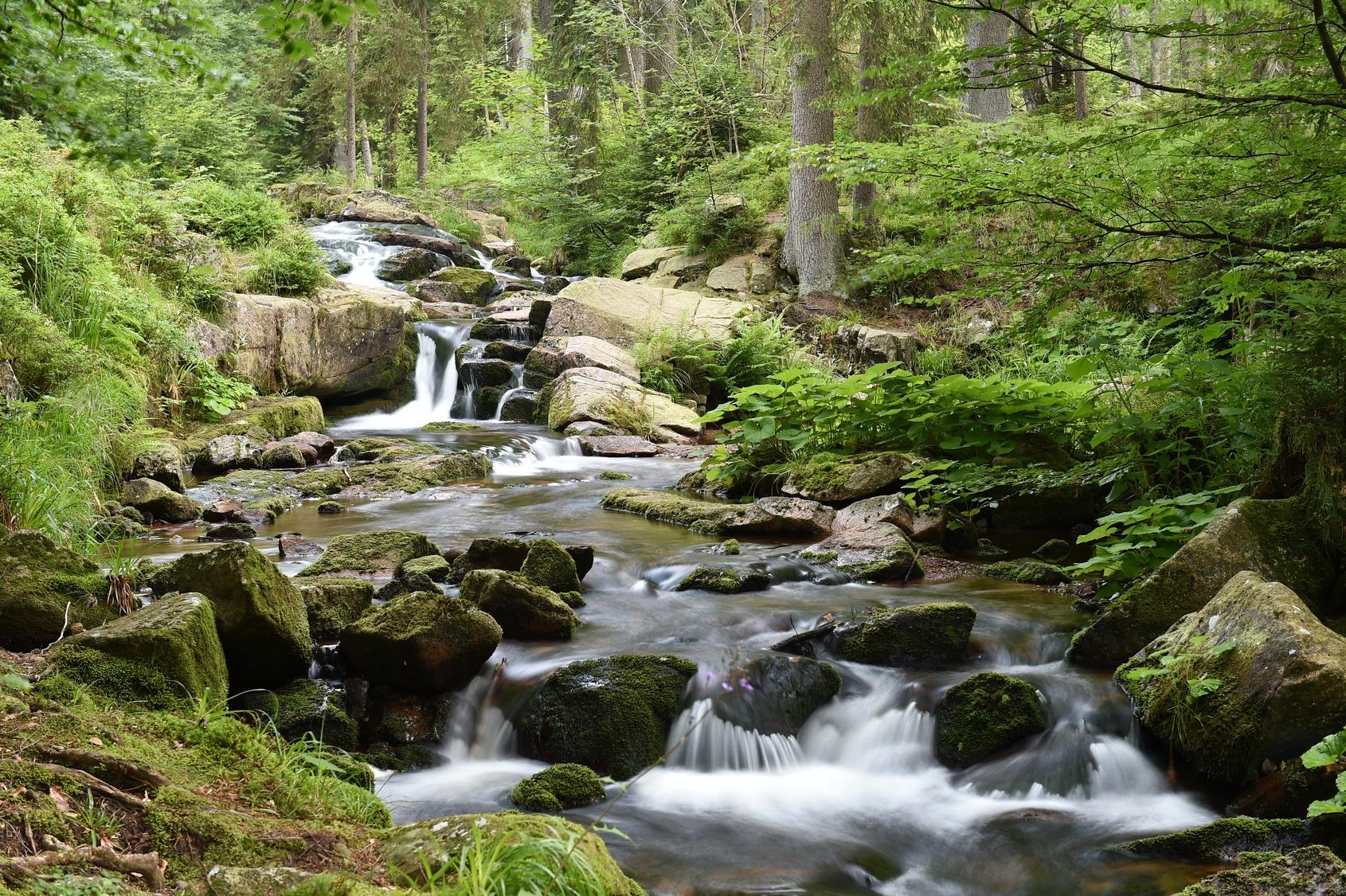 Waldbach im Harz